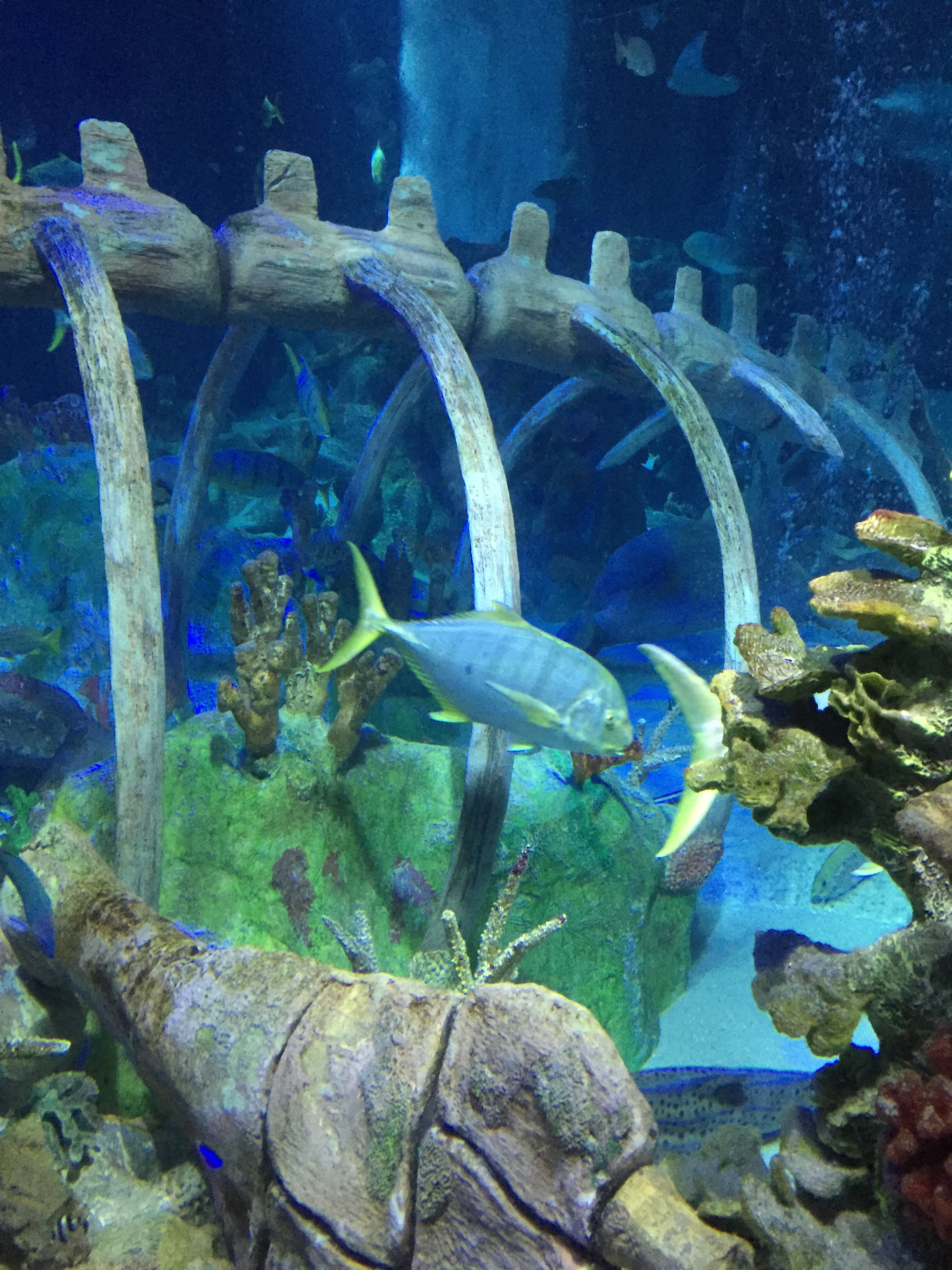 A Giveaway For Tickets To Sea Life Arizona Aquarium The